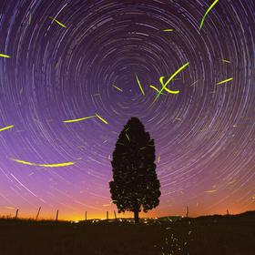 Světlušky tančí s hvězdami