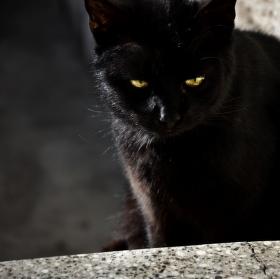 Tajemná kočka