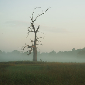 Sám v ranní mlze