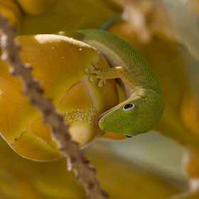 Na nektaru