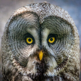 The owls are not what they seem...