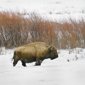 obrázky z přírody Severní Ameriky (16)