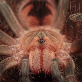 Ve světě pavouků