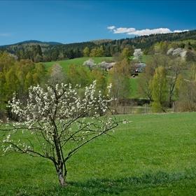 Jaro na samotě pod Boubínem