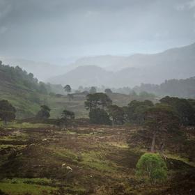 Ranní mlha v Glen Affric, Skotsko