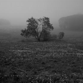 Mlhavé ráno.