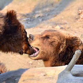 """"""" Láska medvědí """" - pro ty, co nevědí...."""