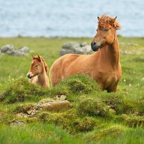obrázky z islandské přírody (50)