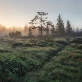 Mezilesní slať