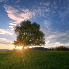 Slnkom naklonený