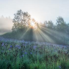 Modré ráno