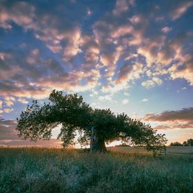 Raněný velikán při západu slunce