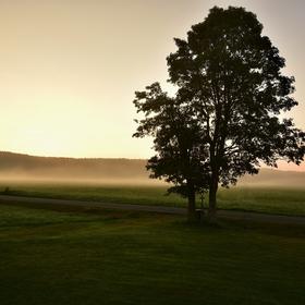 V ranním oparu - Šumava