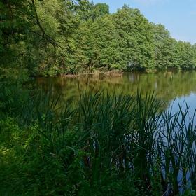 Krasoňovský rybník