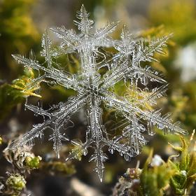 Sněhová vločka v mechu