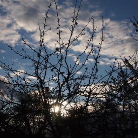 Západ slunce za  jabloní.