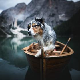 Dog explorer