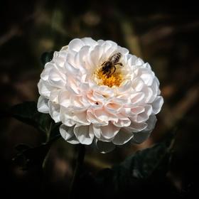 Ještě stále kvetou...