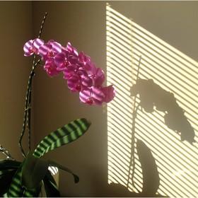 Žaluzie - dělí světlo a stín