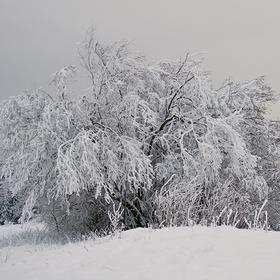 Ladovská zima
