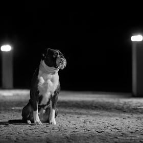 Matilda ve světle lamp