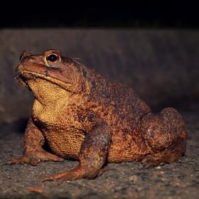 KUK na žábu :-)