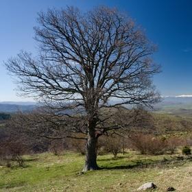Kokino, Makedonie - jeden strom, jeden list ...