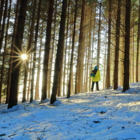 Záře v lese