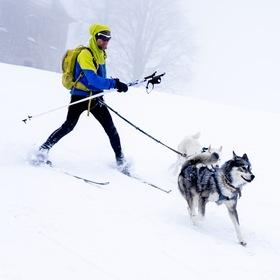 Šediváčkův long 2019 - Skijőring