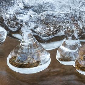 Ledové vosí báně