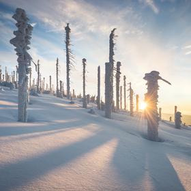 Šumava zimní
