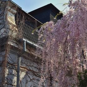Vodopád jarních květů