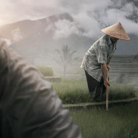 Rýžová pole Jatiluwih