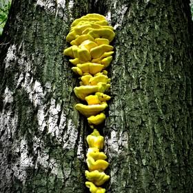 Z PR Polanecký les