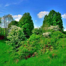 Přírodní zahrada za humny.