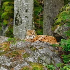 obrázky z Bavorského lesa (2)