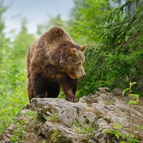 obrázky z Bavorského lesa (4)