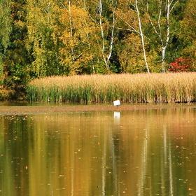 Podzim u rybníku