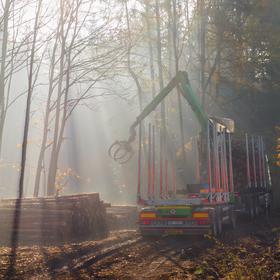 Kůrovcová kalamita na Vysočině - nakládání dřeva