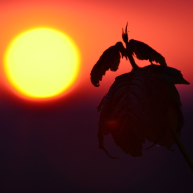 Dračí slunce