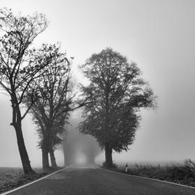 Mlhavá