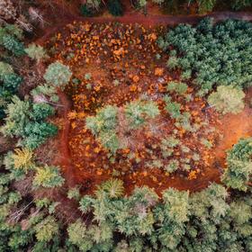 Lesík z dronu