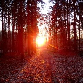 západ slunce z lesní cesty