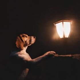 Kousek světla v temnotě