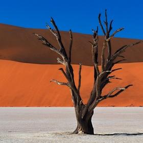 Barvy pouště