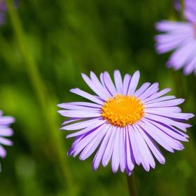 Právě kvetoucí....