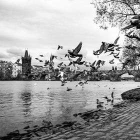 Pohled na starou Prahu s holubí vzdušnou armádou