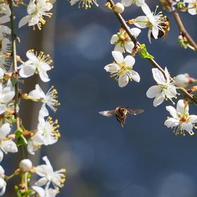 Prostřeno pro včelky