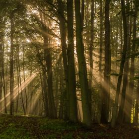 Žlutavský les