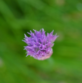Neznámá květinka